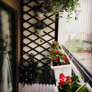 giàn hoa trám đẹp cho ban công chung cư