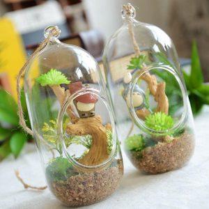 bình thủy tinh trồng hoa đẹp