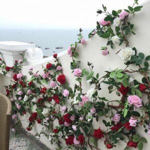tường hoa hồng leo giả